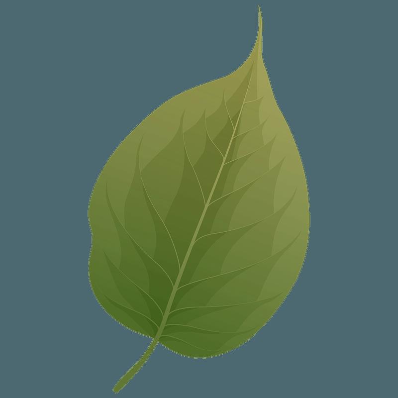 Osage orange summer leaf clipart