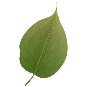 Osage orange summer leaf clipart