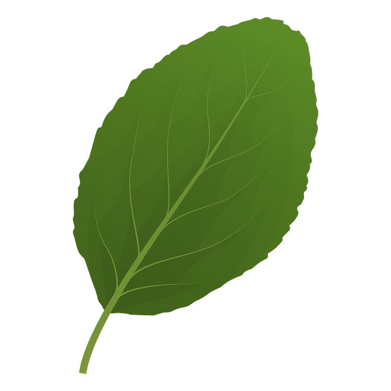 Plum tree spring leaf clipart
