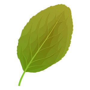Plum tree summer leaf clipart