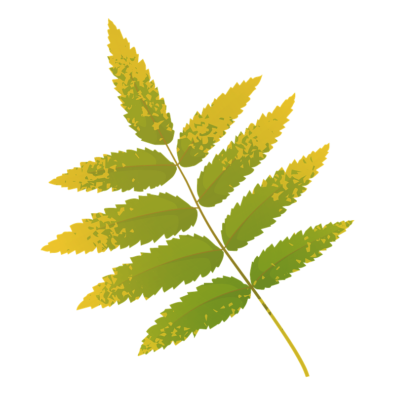 Rowan tree yellow leaf clipart