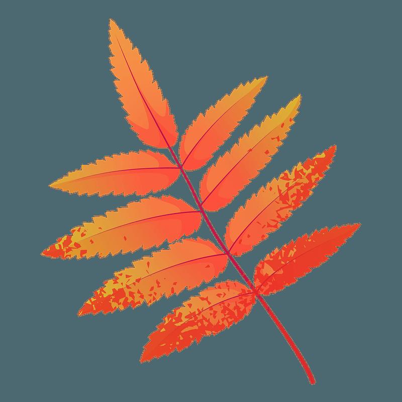 Rowan tree red leaf clipart
