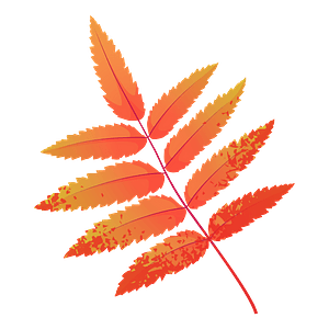 Rowan tree red leaf clipart