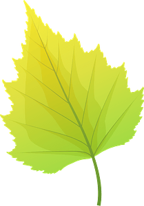 Silver birch autumn leaf clipart