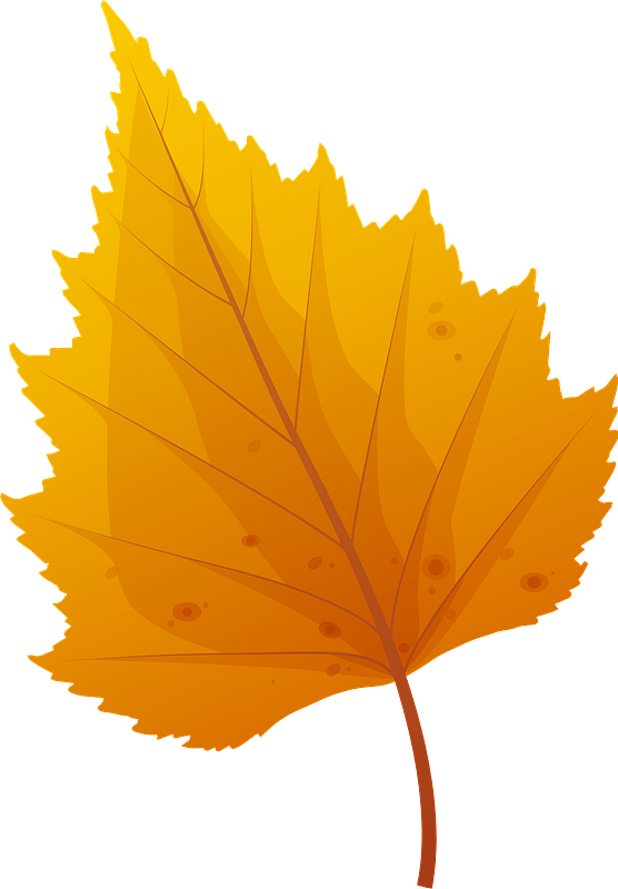 Silver birch late autumn leaf clipart