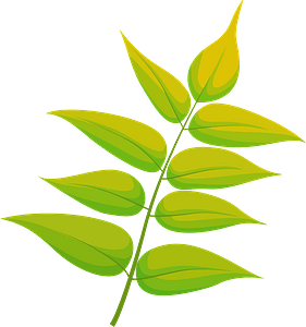 Tree of heaven yellow leaf immagine clipart