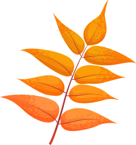 Tree of heaven red leaf clipart