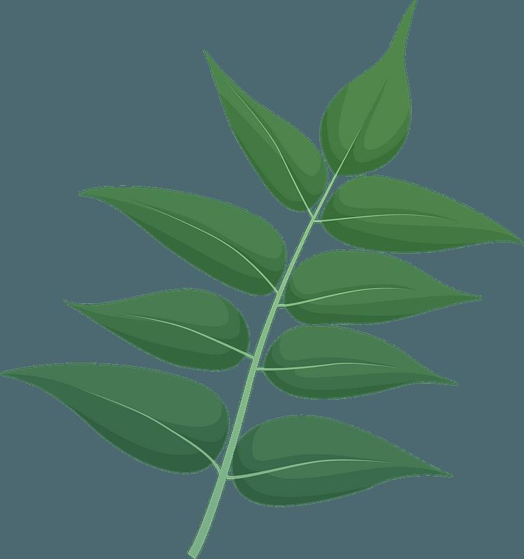 Tree of heaven green leaf clipart