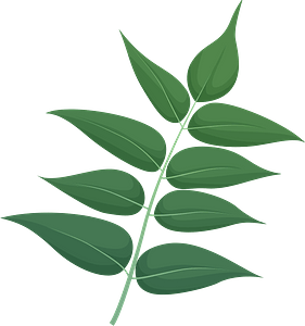 Tree of heaven green leaf clipart