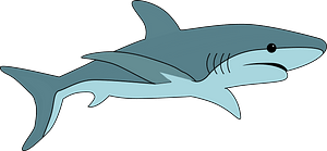 Shark immagine clipart