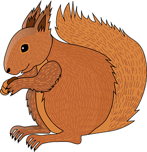 Squirell clipart