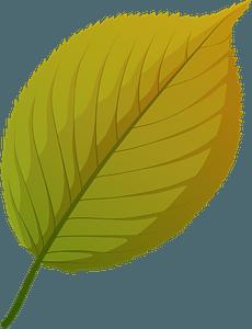Apple tree autumn leaf clipart