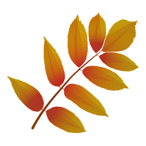 Ash tree red leaf clipart