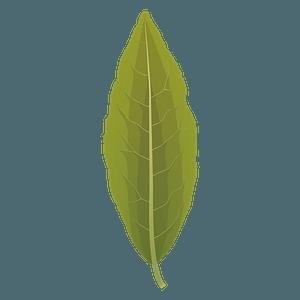 Laurel tree autumn leaf clipart