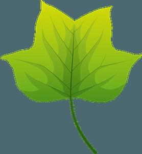 Tulip tree autumn leaf clipart
