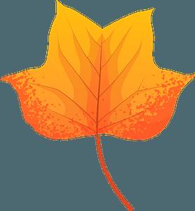 Tulip tree late autumn leaf clipart