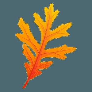 White oak yellow leaf clipart