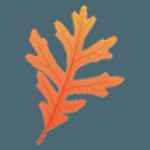 White oak late autumn leaf clipart