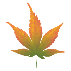 Japanese maple yellow leaf clipart