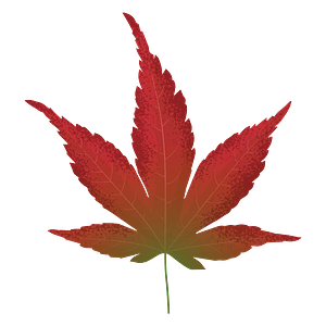 Japanese maple red leaf clipart