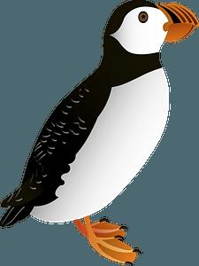 Atlantic puffin clipart