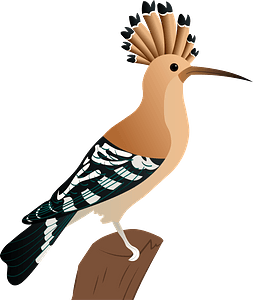 Eurasian hoopoe clipart