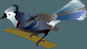 Blue Jay clipart