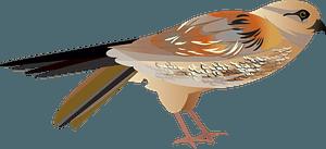 Falco Bird clipart