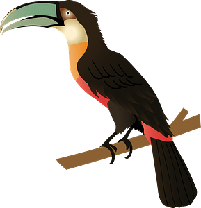 Red-billed Toucan clipart