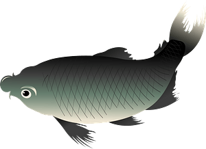 Japanese Koi Fish clipart