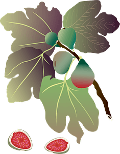 Common Fig plant clipart