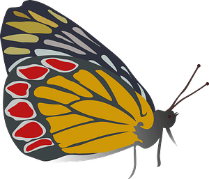 Butterfly Orange Gonepteryx Rhamni clipart