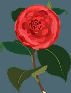 Camellia Flower clipart