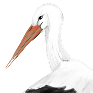 White stork clipart