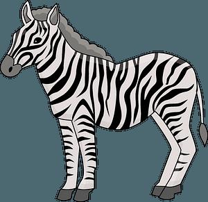 Zebra кліпарт