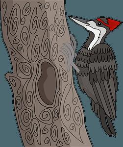 Woodpecker clipart