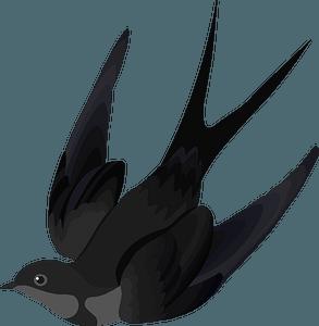 Swallow Bird clipart