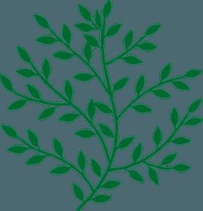 Green branch clipart