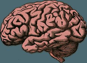 Human brain clipart