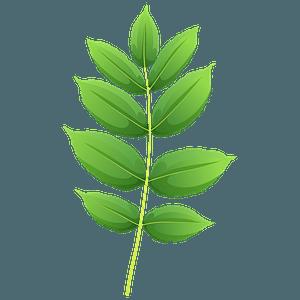 Black ash spring leaf clipart
