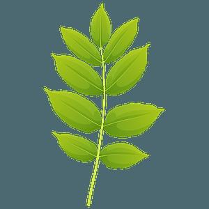 Black ash summer leaf clipart