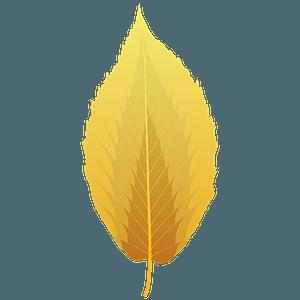 Black birch autumn leaf clipart
