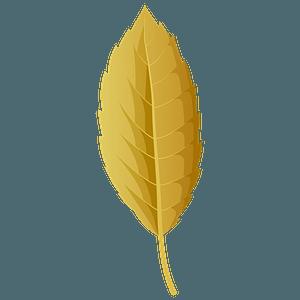 Cork oak autumn leaf clipart