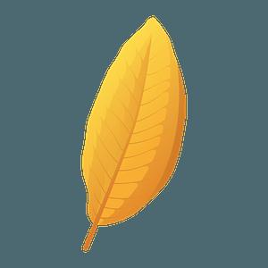 Shingle oak yellow leaf clipart