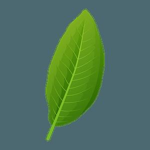 Shingle oak green leaf clipart
