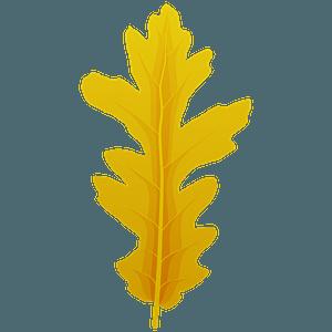 Turkey oak autumn leaf clipart