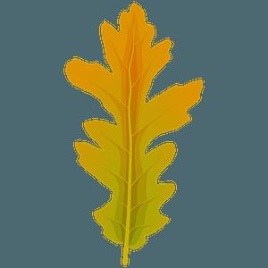 Turkey oak summer leaf clipart