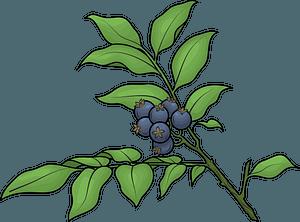 Huckleberry clipart