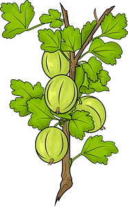 Gooseberries on a branch clipart
