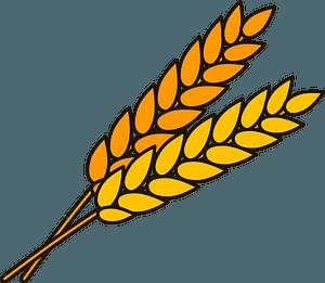 Wheat clipart